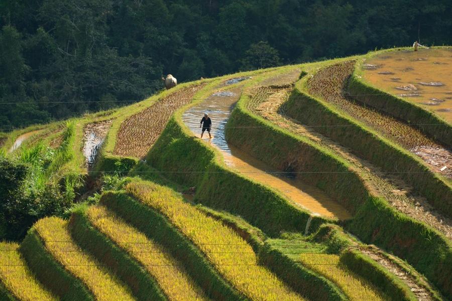 I terrazzamenti di riso in Vietnam nella valle di Mu Cang Chai. Foto ...