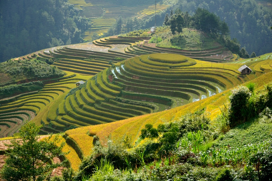 I terrazzamenti di riso in Vietnam nella valle di Mu Cang Chai ...